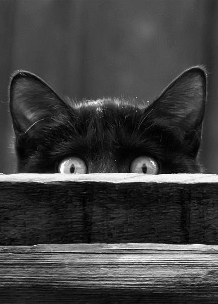 boo cat