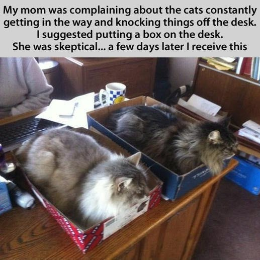 box for cats on desk