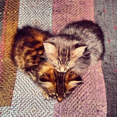 brown kitten heart
