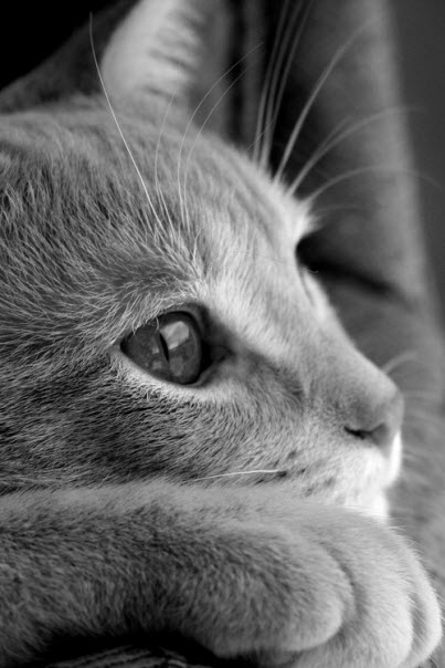 bw cat thinking