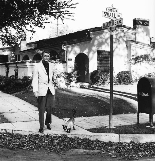 cary grant walking cat