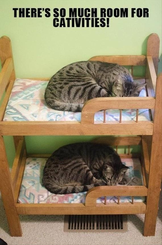 cat bunk bed