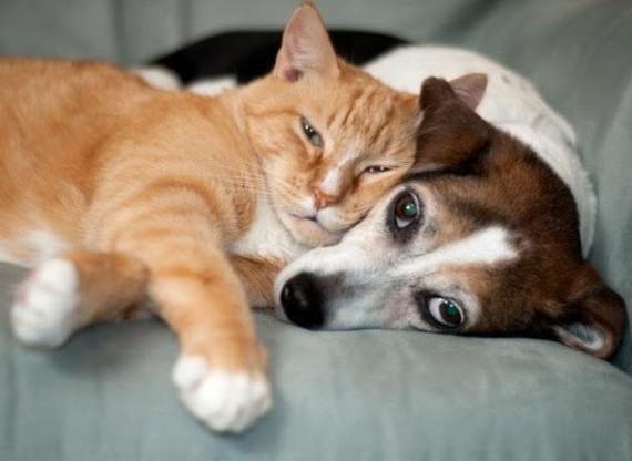 cat dog harmony