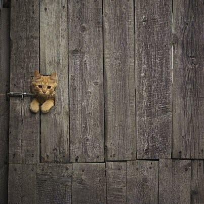 cat flap barn