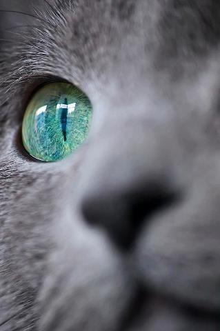cat green eye photo