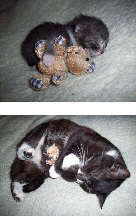 cat grows up with teddy