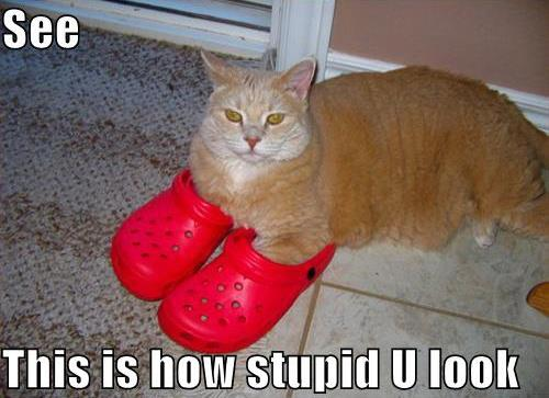 cat in Crocs