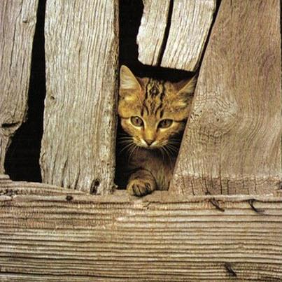 cat in barn