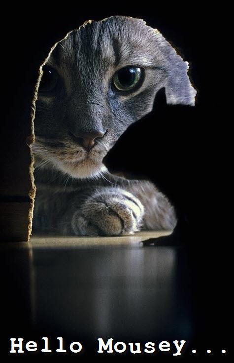 cat mouse hole