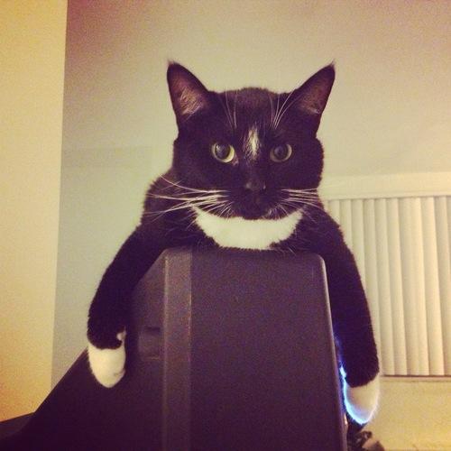 cat on TV