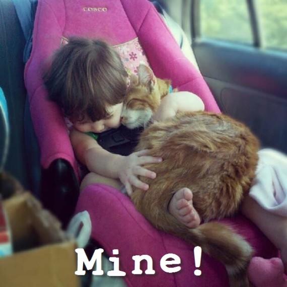 cat on baby