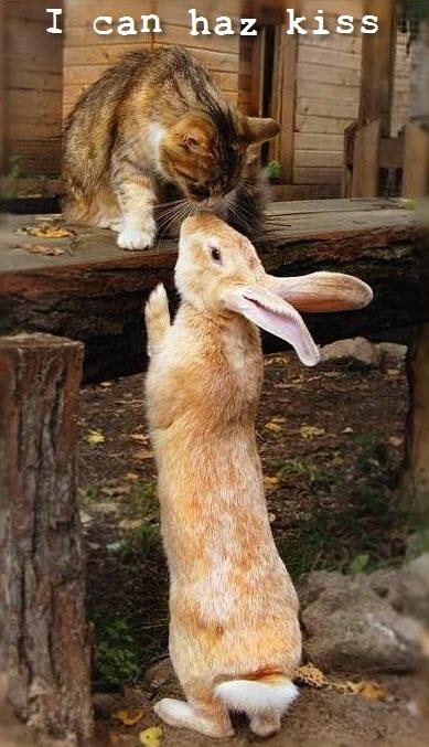 cat rabbit kiss