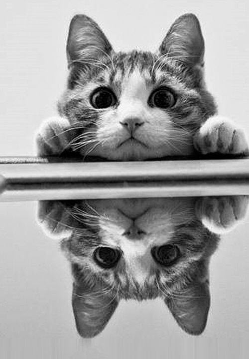 cat reflection bw