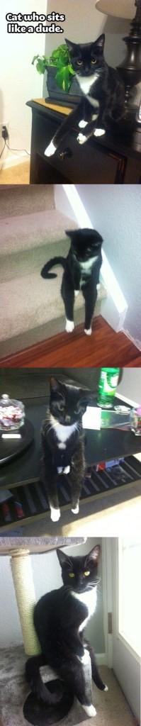 cat sits like dude