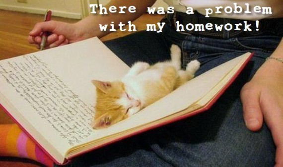 cat sleeping homework