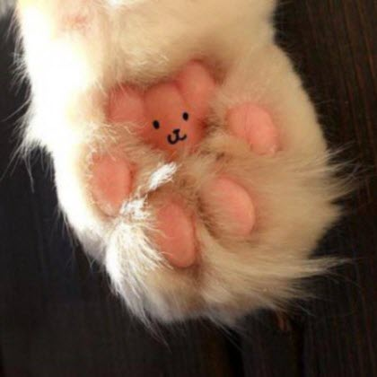 cat teddy paw