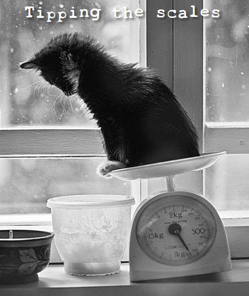 cat tipping the scales
