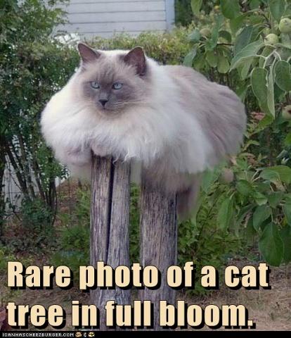 cat tree full bloom