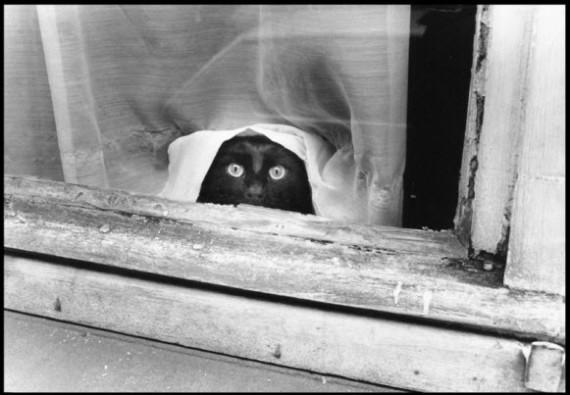 cat under net