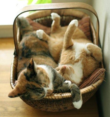 cat veg basket