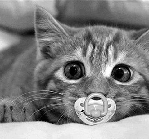 cat with dummy