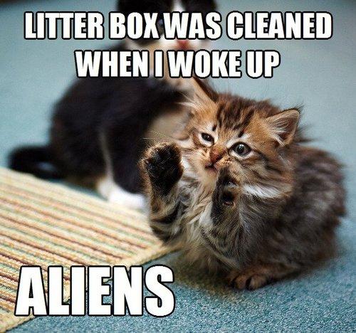 clean litter box