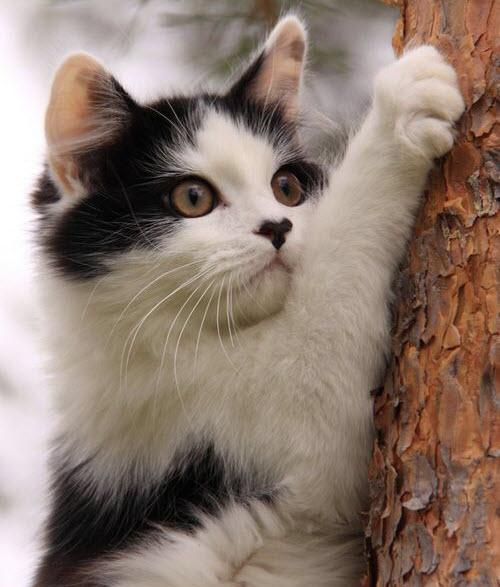 climbing tree cat