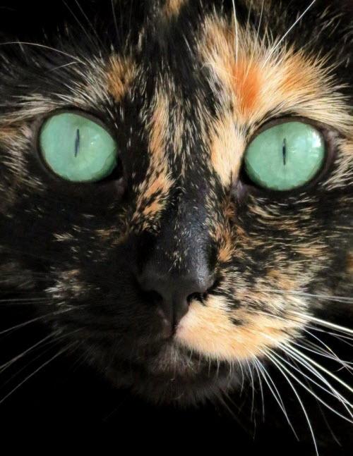 close up green eyes