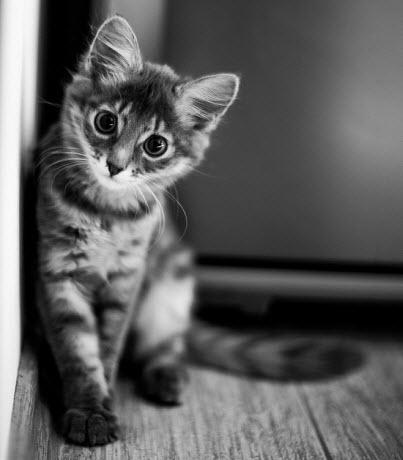 cute bw kitten