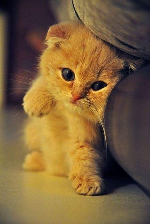 cute cream kitten sofa