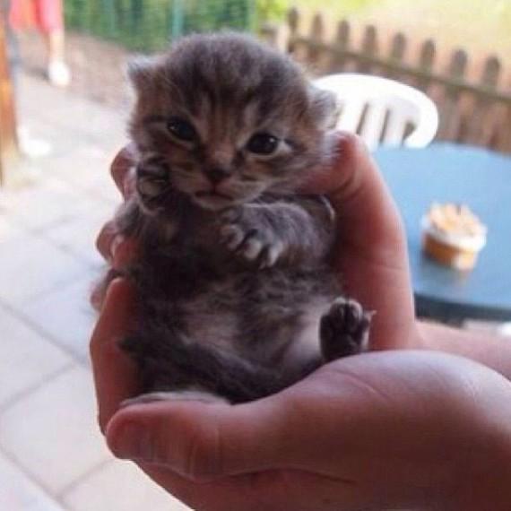 cute handful
