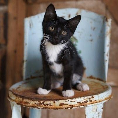 cute kitten blue stool