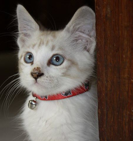 cute nose cat
