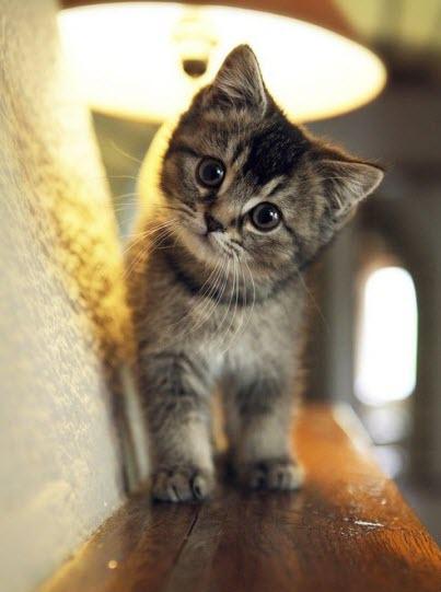 cute tiny tabby