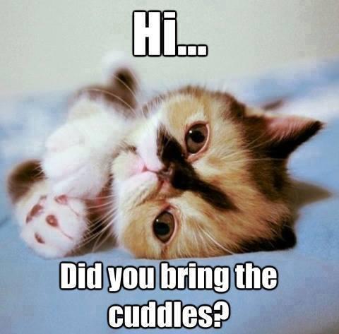 did you bring cuddles