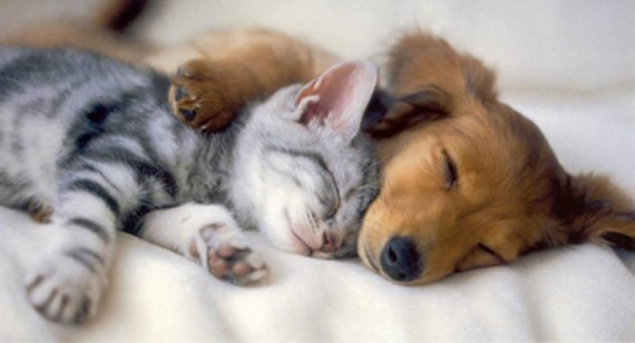 dog and cat hug