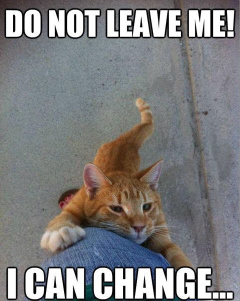 dont leave cat