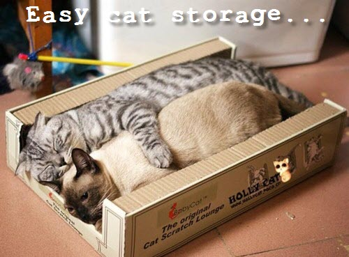 easy storage cats