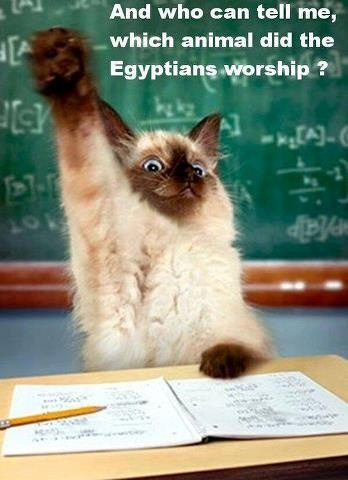 egyptians worship cats
