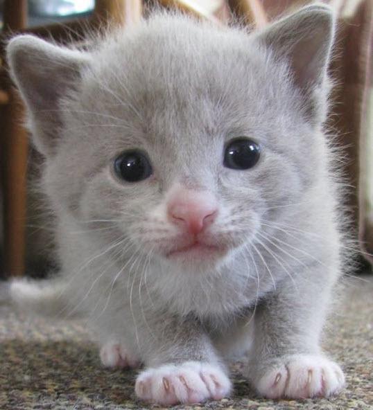 face close kitten