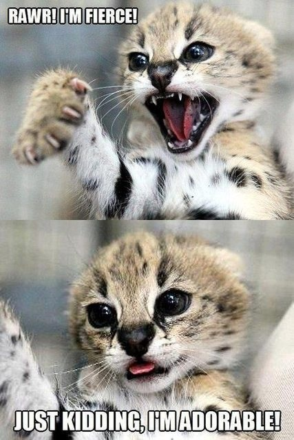 fierce and adorable