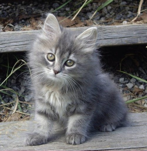 fluff bundle cat