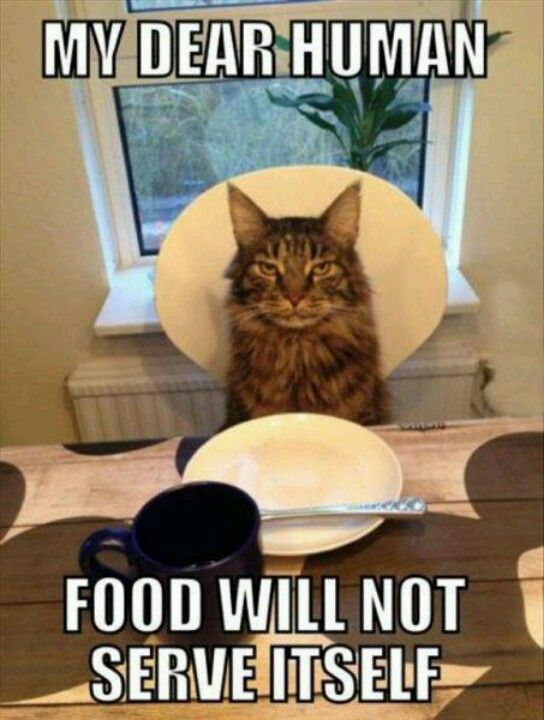food not served