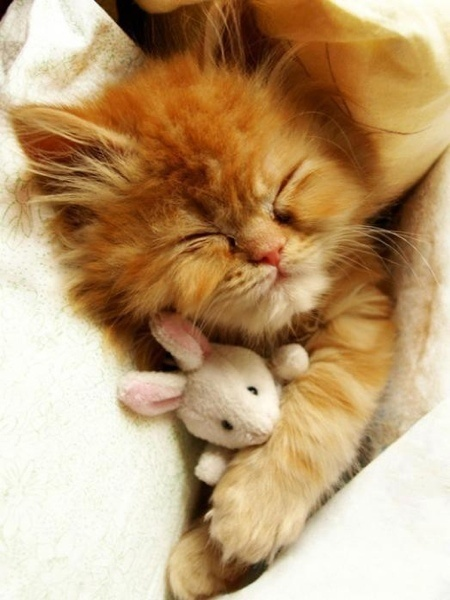 ginger with lamb
