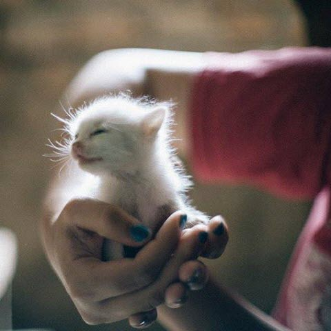 handful o kitten large