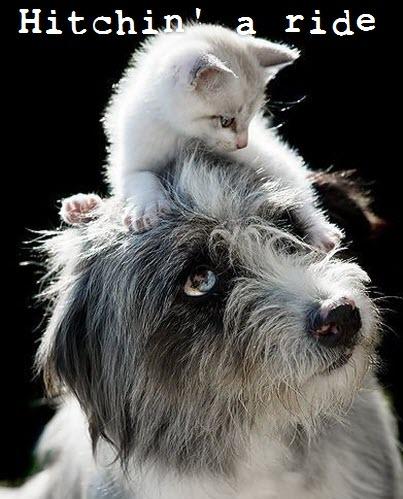 hitchin a ride cat