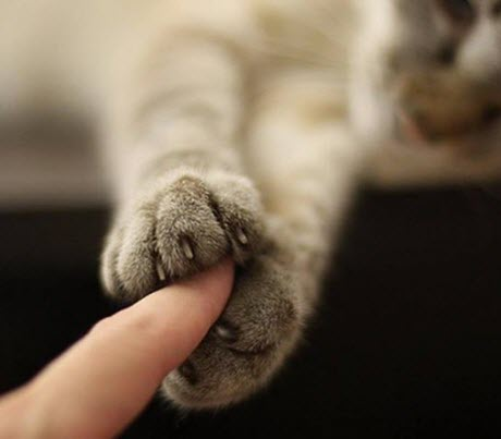 holding paws cats
