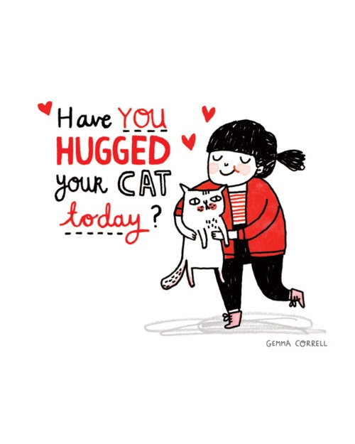 hugged your cat