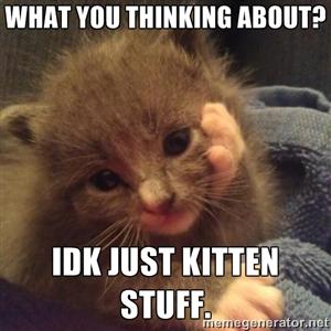idk kitten stuff