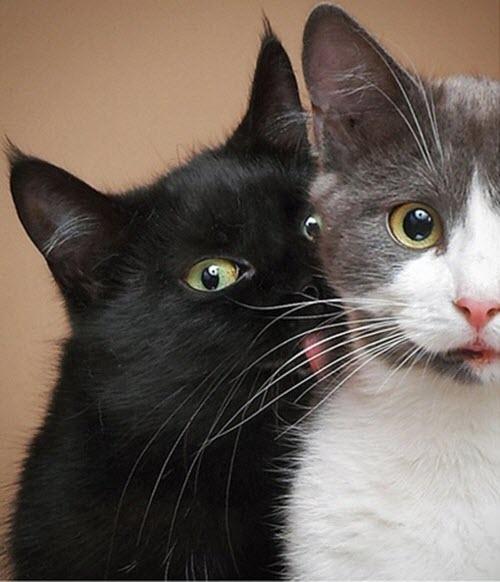 im licking you